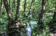 Геродотів ліс Кінбурнської коси