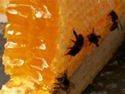 соти і бджоли